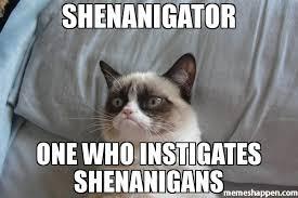 I Should Buy A Boat Meme Generator - shenanigator one who instigates shenanigans meme grumpy cat bed
