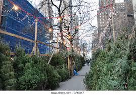 christmas tree on sale christmas trees city sale stock photos christmas trees