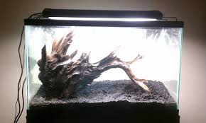 aquascaping layouts with stone and driftwood kindergarten first tank 29g aquascaping world forum