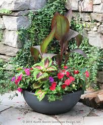 this container garden mixes a combination of canna coleus and