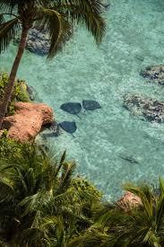 best 25 atlantis bahamas ideas on pinterest paradise island