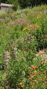 native plant nursery ontario tennessee smart yards native plants a comprehensive database of