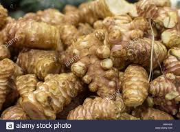 galangal cuisine alpinia galanga root or laos herb used in southern cuisine and