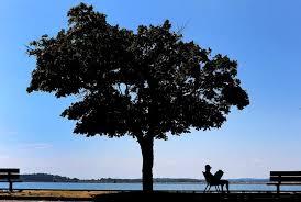 boston s trees need your help the boston globe
