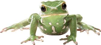 89 ideas images of frogs on emergingartspdx com