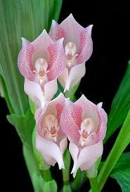 awesome looking flowers best 25 rare flowers ideas on pinterest unusual flowers