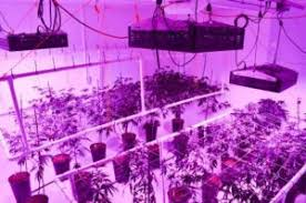 what are the best led grow lights for weed best led grow lights 2018 reviews from the led grow lights experts