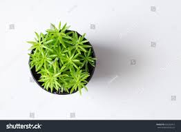 top view small tree plant pot stock photo 636262412 shutterstock