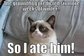 Groundhog Meme - groundhog day meme 3 fat harolds beach club