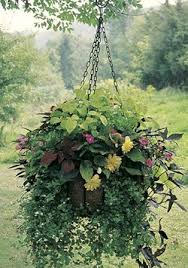 needing ideas for fall hanging baskets for the front porch this