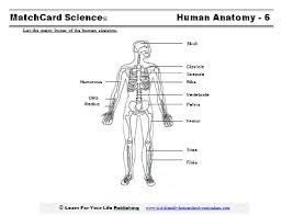 Anatomy Of The Human Skeleton Human Skeleton Diagram