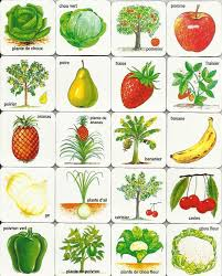 images of free fruits and vegetables sc