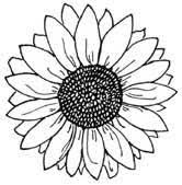 Https I Pinimg Com 236x 2f 79 57 2f7957d4d255154 Sunflower Coloring Page