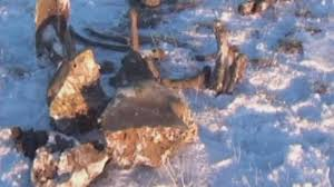 mammoth siberia dead mammoth 10 000