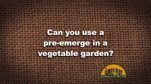 q u0026a can you use a pre emerge in a vegetable garden youtube