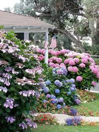 best 25 flowering shrubs for shade ideas on shade