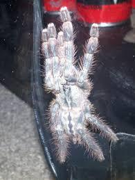 ghost ornamental arachnoboards