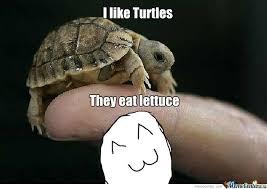I Like Turtles Meme - i like turtles by mrlolol meme center