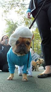 French Bulldog Costumes Halloween Halloween Howl Dog Costume French Bulldog Smurfs Carl U2026 Flickr