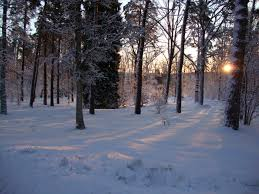 free images tree forest snow winter sunlight