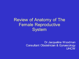 Anatomy Of Reproductive System Female Review Of Anatomy Of The Female Reproductive System Ppt Video