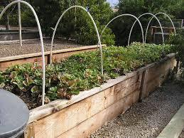 creative of build a raised vegetable garden bed deer proof cedar