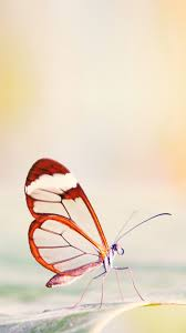 free download butterfly iphone wallpaper page 3 of 3 wallpaper