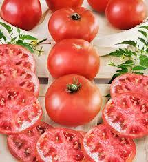 big boy tomato high yields large fruit