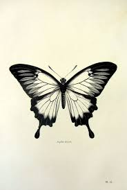 best 25 butterfly drawing ideas on pinterest butterfly tattoos