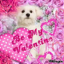 bichon frise gif be my valentine happy valentine u0027s day gif puppy gifs