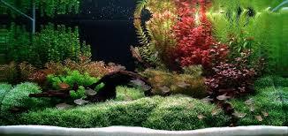 Aquascape Designs For Aquariums 7 Aquascaping Styles For Aquariums The Aquarium Guide Freshwater