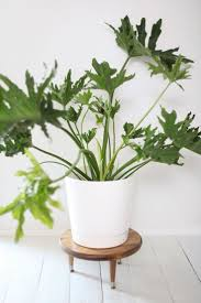 make this midcentury style plant stand to add height your larger