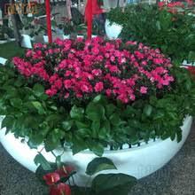 large fiberglass planter large fiberglass planter suppliers and