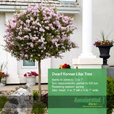 Outdoor Potted Plants Full Sun by Exterior Design Appealing Outdoor Potted Plants With Dwarf Korean