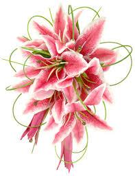 stargazer bouquet brides cerise stargazer wedding shower bouquet