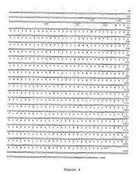 patent us20050164347 actinobacillus succinogenes shuttle vector
