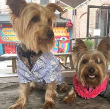 National Patios by Proposed Ohio Bills Would Finally Allow Dogs On Restaurant Patios