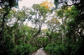 Georgia nature activities images Cumberland island 10 don 39 t miss activities for this undeveloped jpg