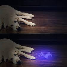 bed bug uv light uv torch vansky uv flashlight black light for pet urine detection