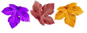 free photo large leaf decorate background free image on