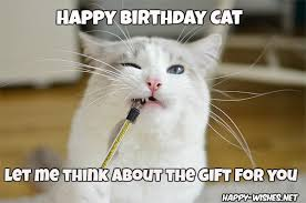 Happy Cat Meme - happy birthday wishes for cats quotes images memes happy wishes
