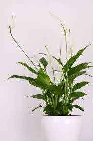 house plants that don t need light 5 indoor plants that don t need much light house plants