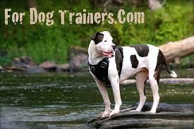 american bulldog x belgian malinois american bulldog dog supplies