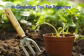 10 gardening tips for beginners u2013 bless the plants