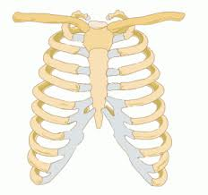 left rib cage musculoskeletal issues articles health