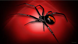 halloween desktop wallpaper widescreen wallpaper of spider
