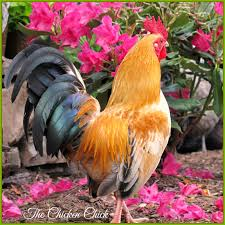 Flowers Gardens And Landscapes by The Chicken Chick Landscape Gardening With Chickens
