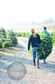82 best christmas tree farm images on pinterest christmas tree