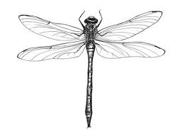 best 25 dragonfly drawing ideas on pinterest dragonfly tattoo