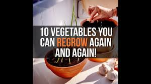 Vegetables You Can Regrow by 10 Vegetables You Can Regrow Again And Again Youtube